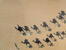 tuareg-caravan