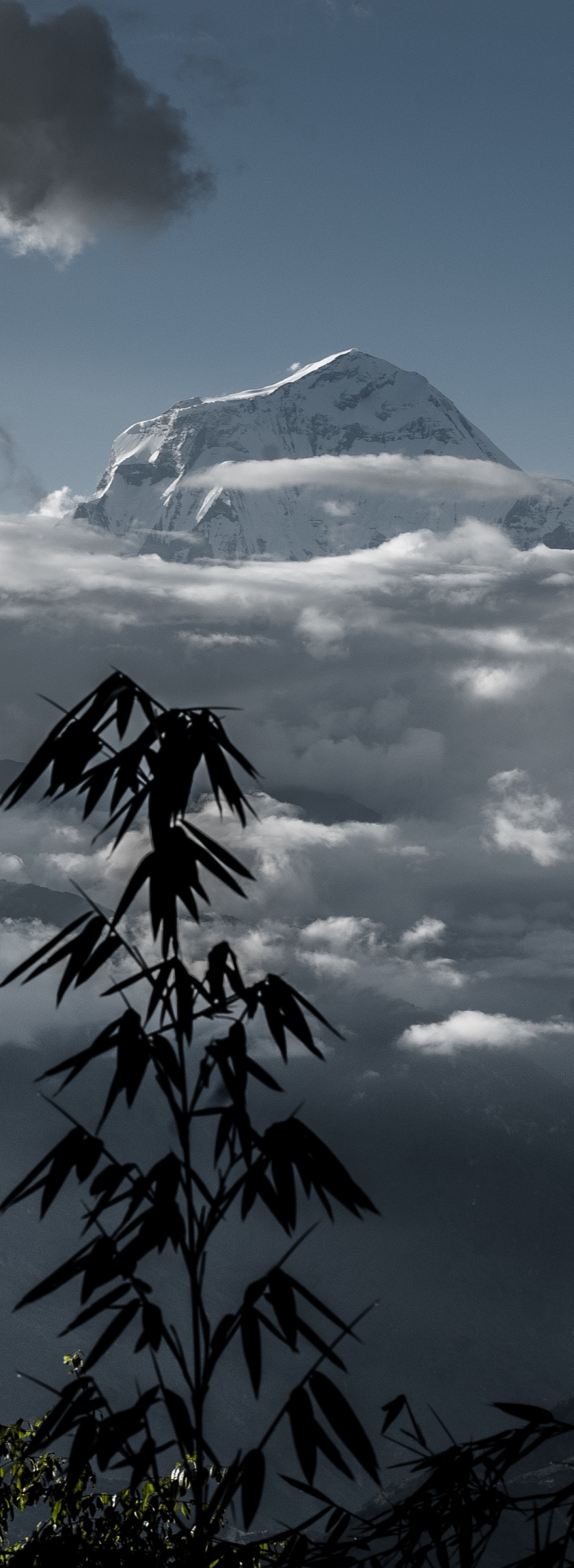 bamboo-annapurna-copy