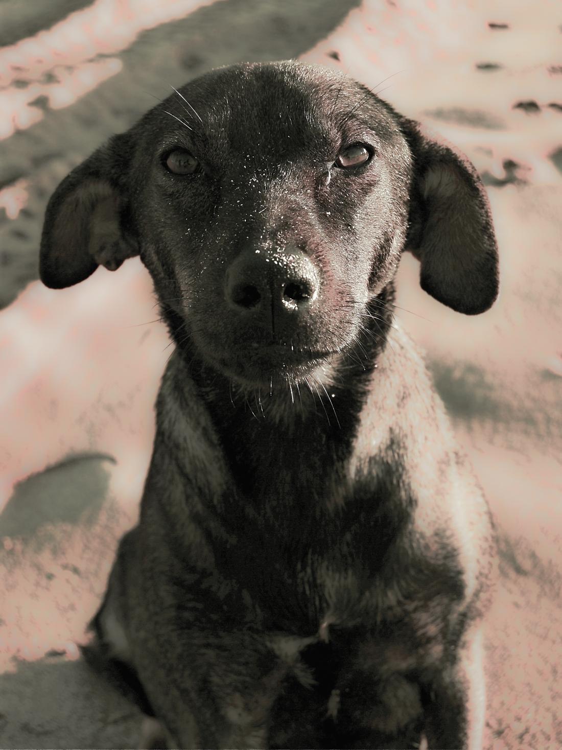 doggy-on-oualidia-beach-morocco