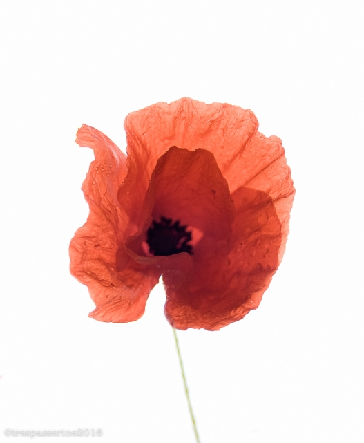 At the setting of the sun and in the morning, we will remember them
